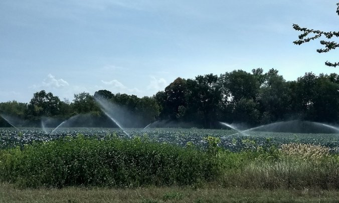 Bewässerung im Elsass
